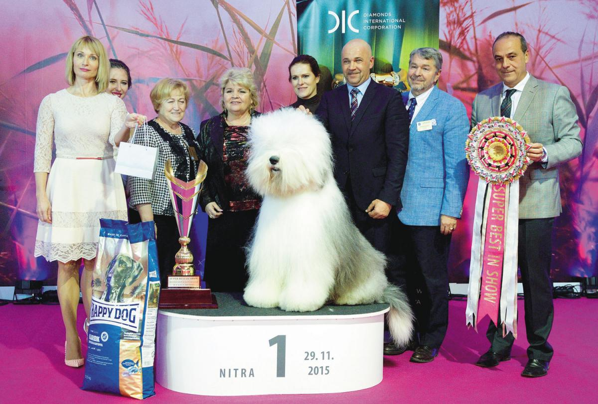 SUPER BEST IN SHOW: 1. bobtail - BOTTOM SHAKER ZEPHYR DREAM, Koroknai József