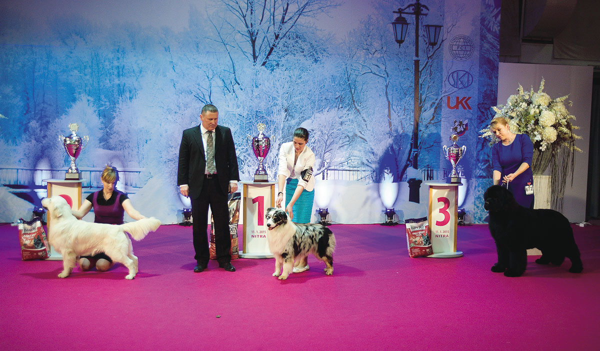 BEST IN SHOW 11. 1. 2015: 1. Australian shepherd - Jurášek Srdcové Eso, Hodová Linda * 2. Golden retriever - Evidog Sorbon, Siková Eva * 3. Newfoundland - King Of Helluland You Are The Best, Kročko Soňa a Vladimír
