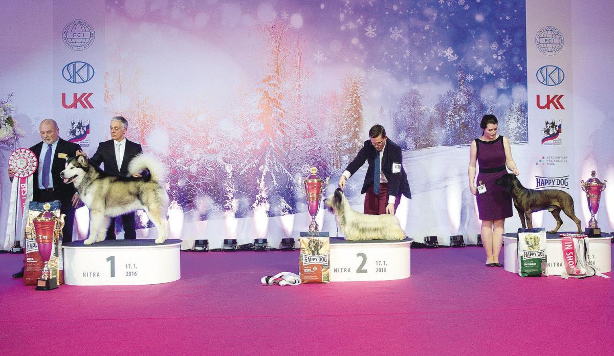 BEST IN SHOW: 1. aljašský malamut - JOSEPH DEL BIAGIO, Pizzolato Maurizio * 2. skye terrier - GOLD MONARH TRAMONTANA, Kanásová Martina * 3. bavorský farbiar - BRIX Z KYNCEĽOVEJ, Heldová Lucia